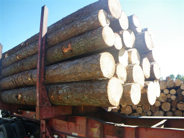 Southern Yellow Pine Wood Logs