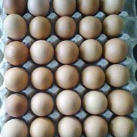 Brown Shell Eggs