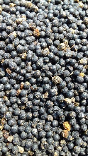 Nepali Shatavari Seeds