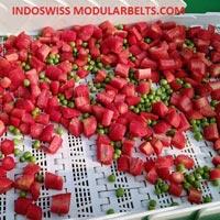 Fruit & Vegetable Conveyor System