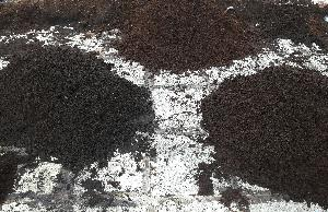 Decomposed Organic Coco Peat