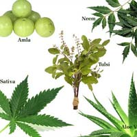 Medicinal and Horticulture Nersury Plant