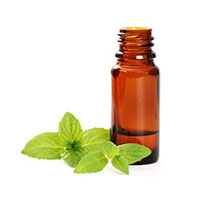 Pure Mint Oil