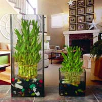 Square Glass Plant Vases