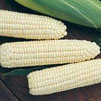 White Maize 02