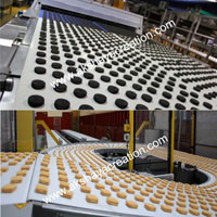 PU & PVC Conveyor Belt