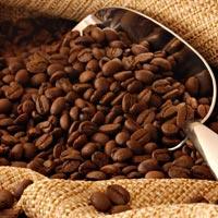 Coffee Bean 02