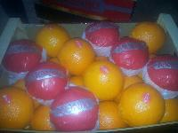 Fresh Oranges 02