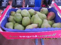 Fresh Pears 02