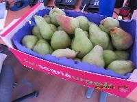 Fresh Pears 04