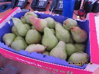 Fresh Pears 05