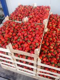 Fresh Strawberries 03