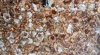 Petrified Wood Slabs