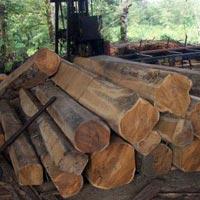 Finished Teak Lumber 05