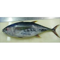 Frozen Yellow Fin Tuna Fish