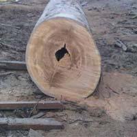 Malaysian Wood Logs