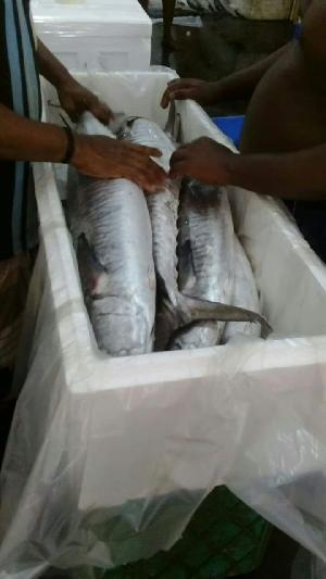 Fresh Chilled Fish 04