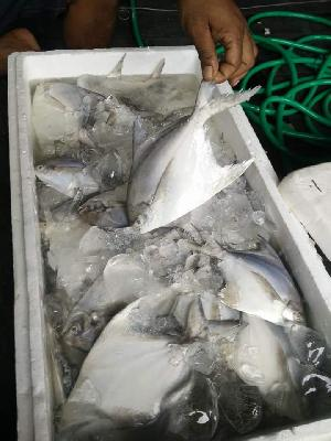 Fresh Chilled Fish 07