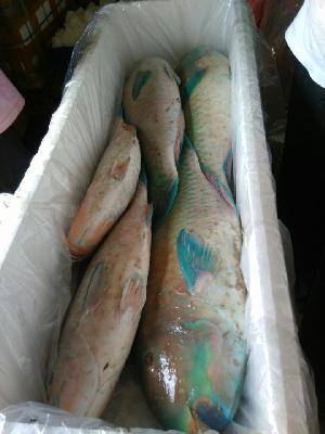 Fresh Chilled Fish 13