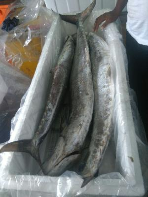 Fresh Chilled Fish 14
