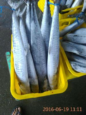 Fresh Chilled Fish 18
