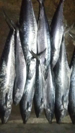 Fresh Chilled Fish 20