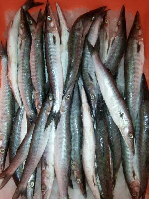 Fresh Chilled Fish 25