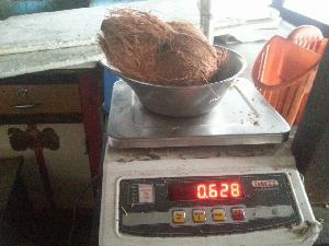 Semi Husked Coconut 12