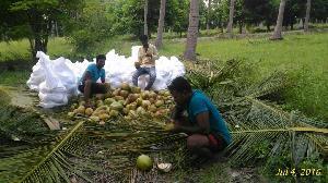 Tender Coconut 06