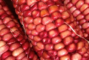 Red Maize 02