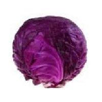 Violet Cabbage