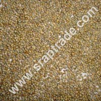 Green Pearl Millet