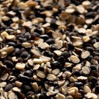 Urad Beans