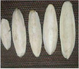 Cuttlefish Bone