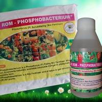 SAFS ROM – Phosphobacterium