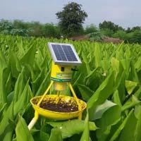 Solar Light Trap on Turmeric