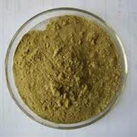 Andrographis Paniculata Powder & Extracts