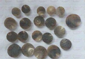 Horn Blank Buttons