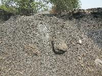 Reject Coal 04