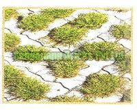 Grass Paver 01