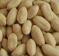 Peanut Nut  Kernel