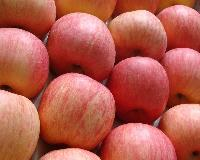 Grade A fresh fuji apples for sale