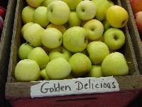 Fresh Golden Delicious Apples For Sale