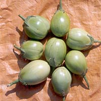 Indo Us Greenball Brinjal F1 Hybrid Seeds