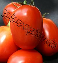 Indo Us Rigour Fighter Tomato F1 Hybrid Seeds