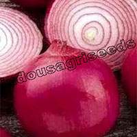 Red Onion F1 Hybrid Seeds