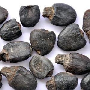 Semecarpus Anacardium (Bhilawa)