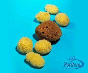 Coral Reef Bath Sponges