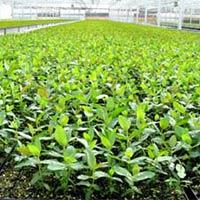 Plant Nursery Consultant