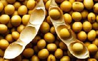 High Protein Organic Soybean Meal